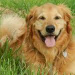 5 Tips To Improve Your Dog's Diet Today