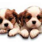 Puppies for Sale – Why an Adult Dog May Be What You Need