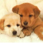 Puppies for Sale: Where To Buy A Dog Or Puppy – A Guide To Dog Sellers