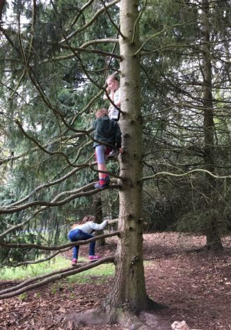 Buzymum - the kids climbing trees at Cliveden