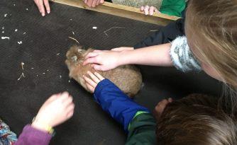 Buzymum - Stroking a bunny at Odds Farm
