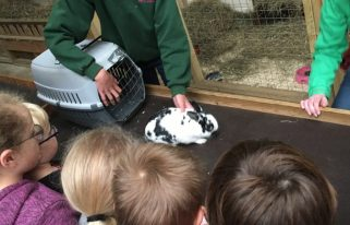 Buzymum - Stroking the bunnies at Odds Farm