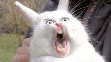 funny cat face pics