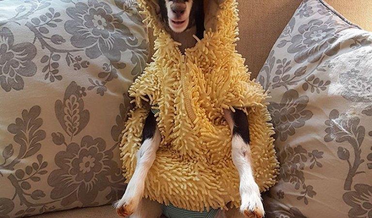 Sadece Ördek Kostümü Giyince Sakinleşen Görme Engelli Keçicik Polly