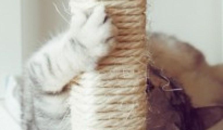Evcil Hayvan Sahiplerinin Hayatını Kolaylaştıracak 16 Pratik Bilgi