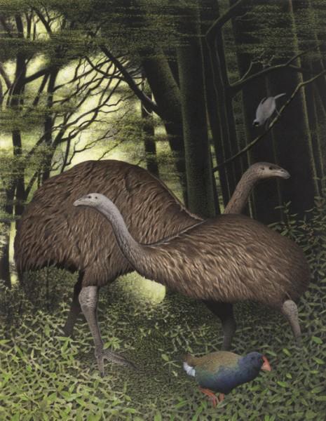 9-Dinornis