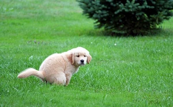 dog-poop-dna-test-2-e1428333853403