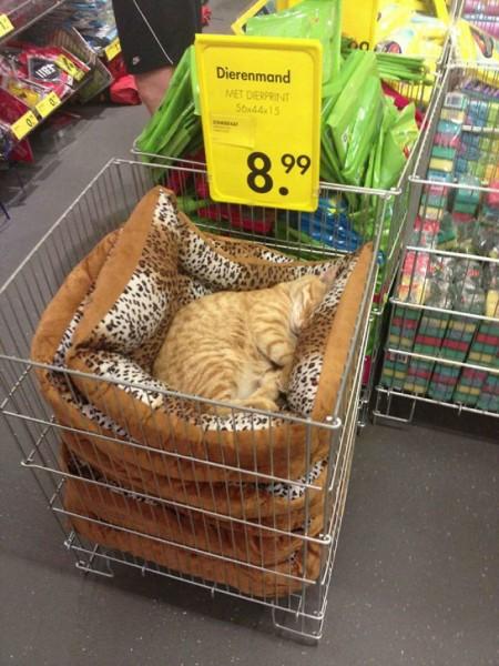 funny-animals-who-dont-give-a-damn-11-58e22e9a01391__700