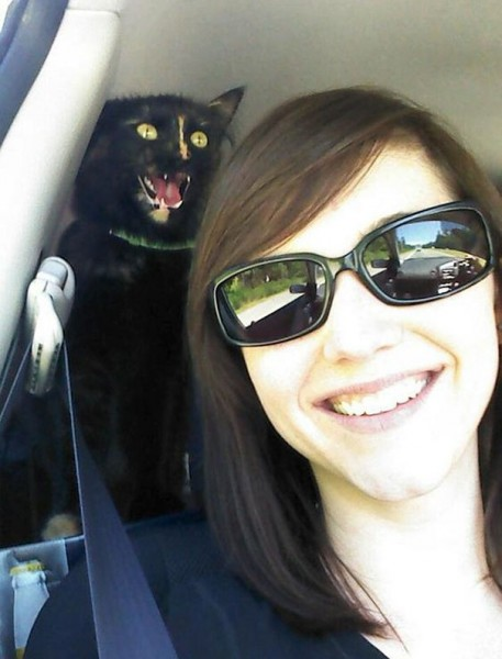 funny-cat-photobombs-44-58e3847b0745f__605