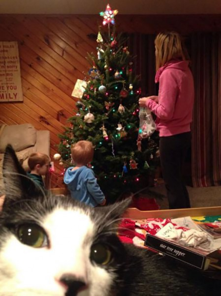 funny-cat-photobombs-59-58e6050579b78__605