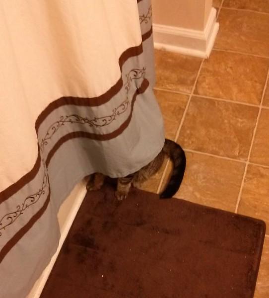 ninja-cat-hiding-funny-27__605