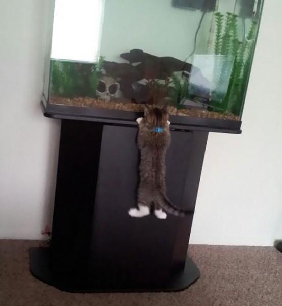 ninja-cat-hiding-funny-5__605
