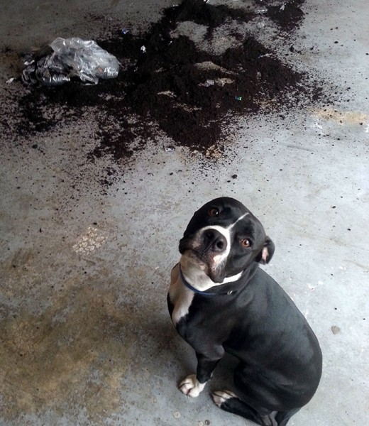 share-the-mess-your-pets-made-when-you-left-them-alone-102-58e6433aee4a4__700