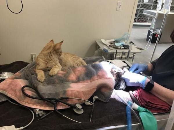 vet-office-cat-calms-patients-ron-6