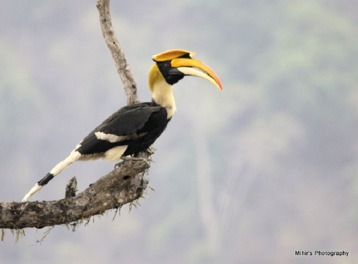Photo Credit http://www.indianaturewatch.net/displayimage.php?id=324521