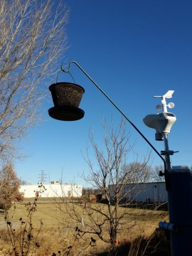 Sunflower seed bird feeder.