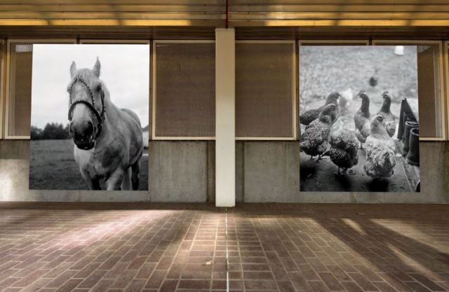 Davey's two photographs featuring a fowl and equines at the Stadium-Chinatown Station