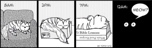 kedi12