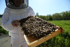 """This frame was in the middle of the hive. We think the queen was on it because there was a large """"lump"""" of bees in the upper right hand side. It was hopping!"""
