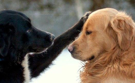 empathy-dogs