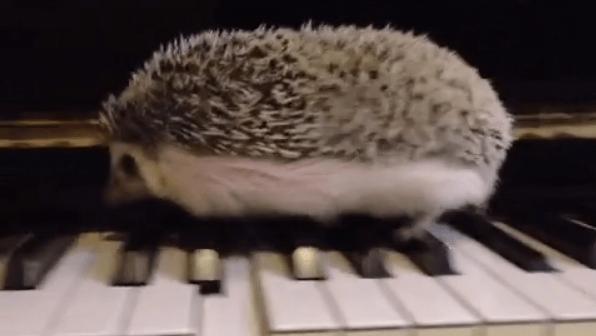 ジャズを演奏するハリネズミ