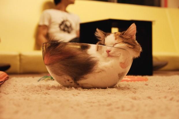 ネコはどこにでもハマる
