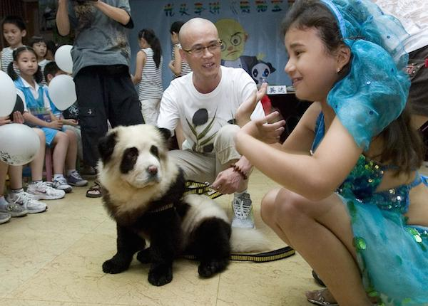 * PANDA PUPPY GREETS FANS