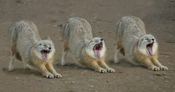 歌う動物の動画