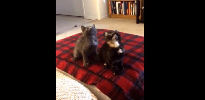 ノリが良すぎるネコのコンビ