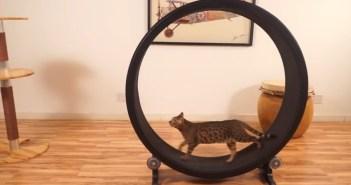ネコの回し車
