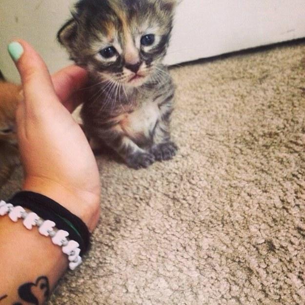 世界一悲しい顔のネコ (2)