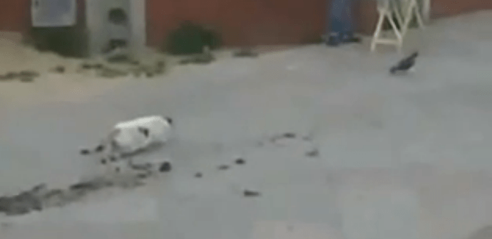 狙っていた獲物に逃げられてがっかりする猫