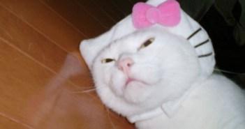 サンリオの「キティちゃんはネコではない」発言に全世界が震撼
