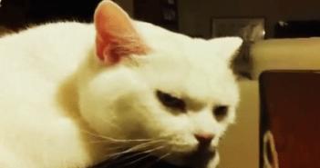 マッサージをしてあげるとええ顔をするネコ