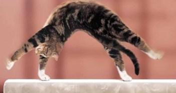 東京オリンピックに向けてコッソリ新体操を練習しているネコ選手
