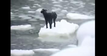 氷の上に取り残さた犬