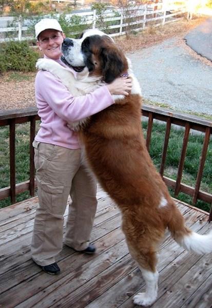 hug (6)