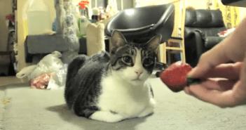 猫スマッシュ