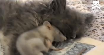 ネコとネズミが仲良し