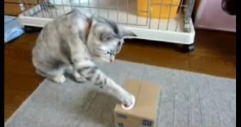 ネコの貯金箱に猫パンチするネコ