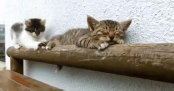 爆睡する子猫とちょっかいを出し続ける子猫