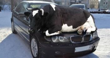 暖を取る動物