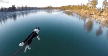湖の上を散歩する犬