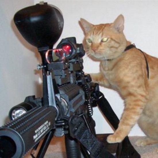 戦うネコ (14)