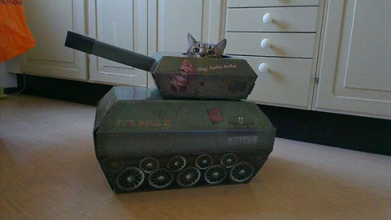 戦うネコ (5)