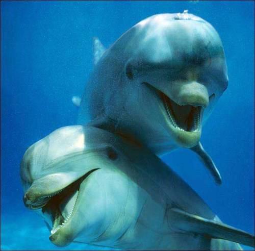 動物の大笑い (2)