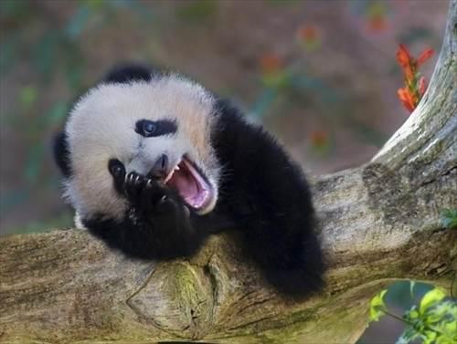 動物の大笑い (7)_R