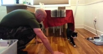帰還兵士を迎える犬と猫
