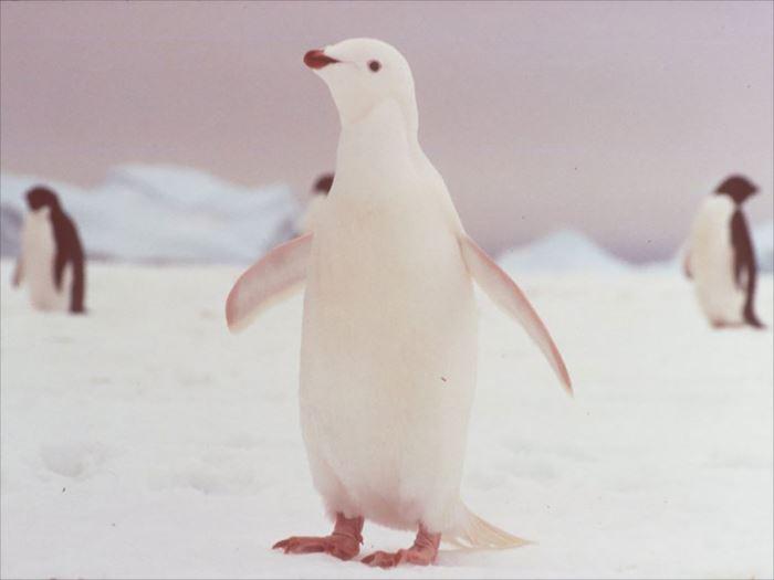 albino-animals-3-12__880_R