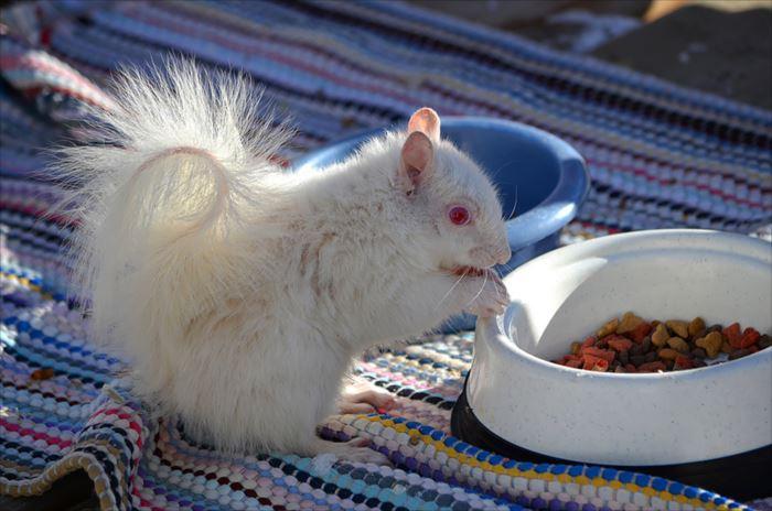 albino-animals-3-23__880_R